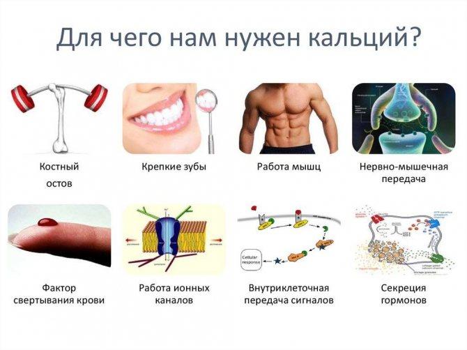 Натуральный кальций в борьбе с болезнями